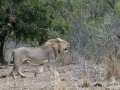 Viaje Surafrica 066