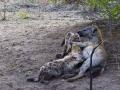 Viaje Surafrica 068