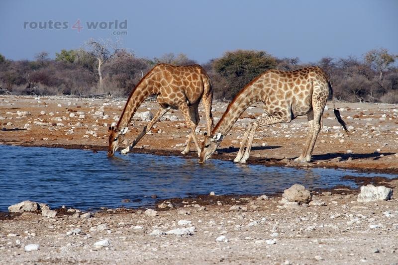 Viaje Namibia 16 178