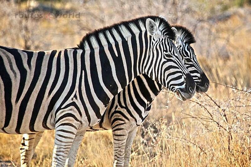 Viaje Namibia 16 196