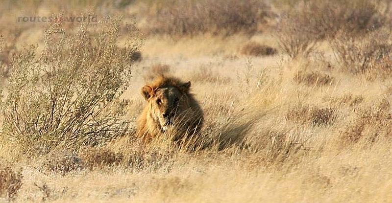 Viaje Namibia 16 200