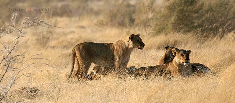 Viaje Namibia 16 201