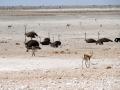 Viaje Namibia 16 182