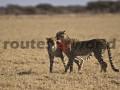 Botswana-R4W-38