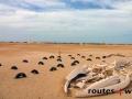 Mauritania 2014 (12)
