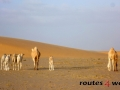 Mauritania 2014 (14)