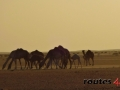 Mauritania 2014 (6)