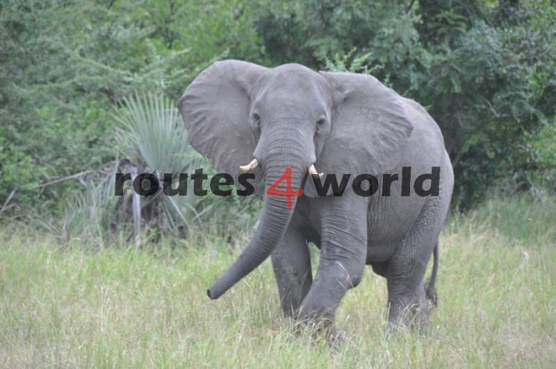Mozambique-11