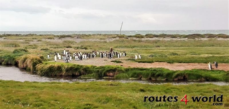 Viaje Patagonia (31)