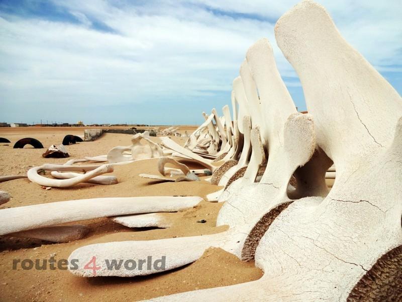 Raid Baobab 2016 - Routes4world - Mauritania - Senegal - Guinea Conakry - Bissau - Gambia (2)