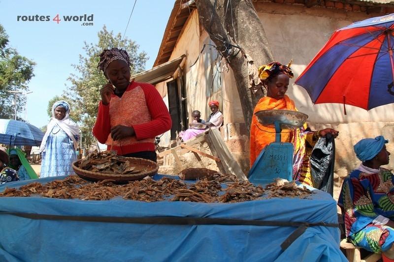 Raid Baobab 2016 - Routes4world - Mauritania - Senegal - Guinea Conakry - Bissau - Gambia (48)