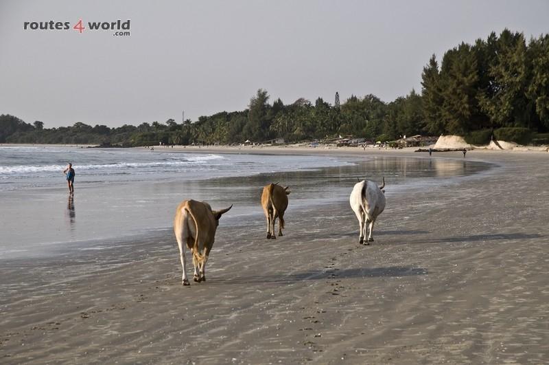 Raid Baobab 2016 - Routes4world - Mauritania - Senegal - Guinea Conakry - Bissau - Gambia (60)