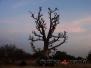 Fotos Raid Baobab -  Exp. Africa Oeste
