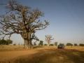 Raid Baobab 2016 - Routes4world - Mauritania - Senegal - Guinea Conakry - Bissau - Gambia (75)