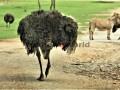 Fotos-Sudafrica-Swazilandia-Lesotho-R4W-22