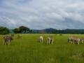 Fotos-Sudafrica-Swazilandia-Lesotho-R4W-31