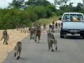 Fotos-Sudafrica-Swazilandia-Lesotho-R4W-34