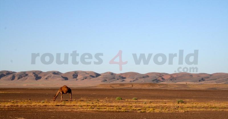 Fotos Marruecos -R4W (22)