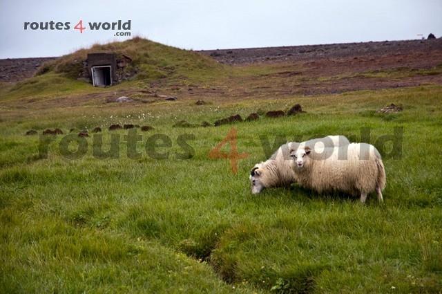 Viaje Islandia TV - Routes4world (18)