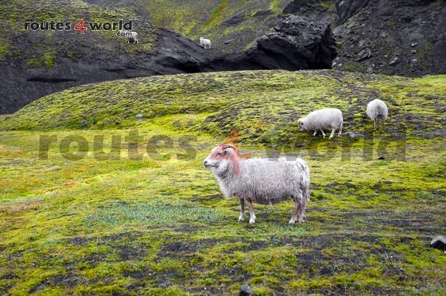 Viaje Islandia TV - Routes4world (30)