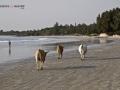 Viaje Senegal-Mauritania52