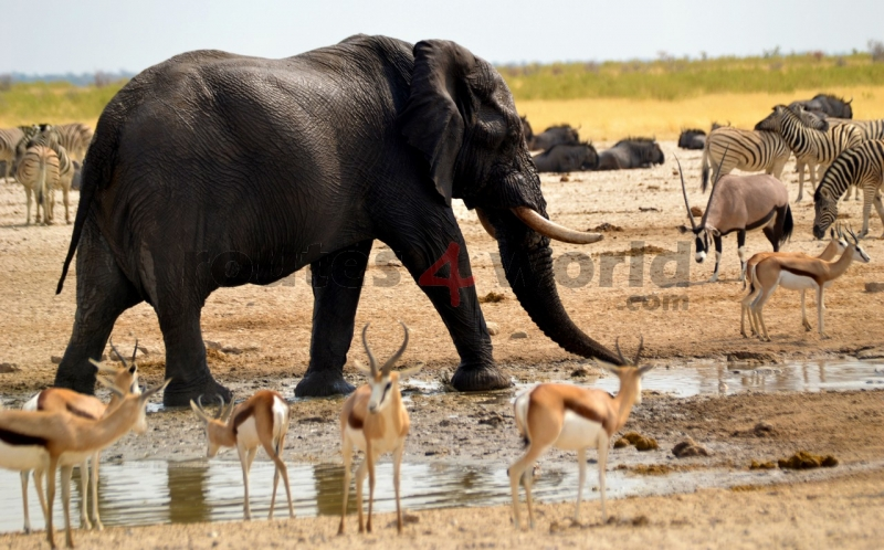 Fotos Namibia Web-R4W (1)