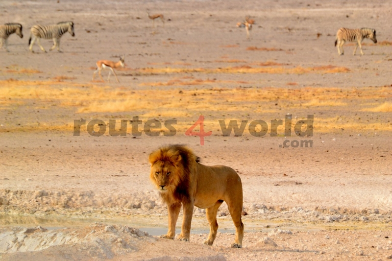 Fotos Namibia Web-R4W (14)