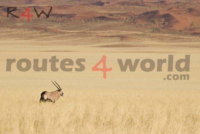 Fotos Namibia Web-R4W (43)