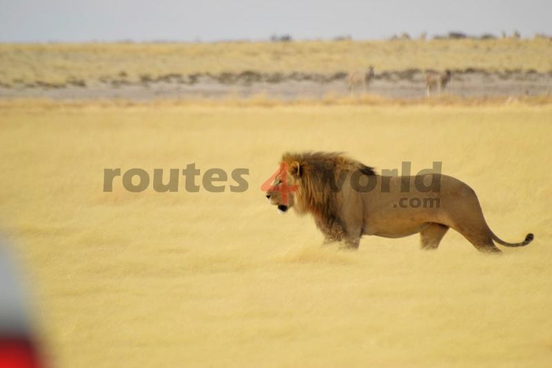 Fotos Namibia Web-R4W (44)