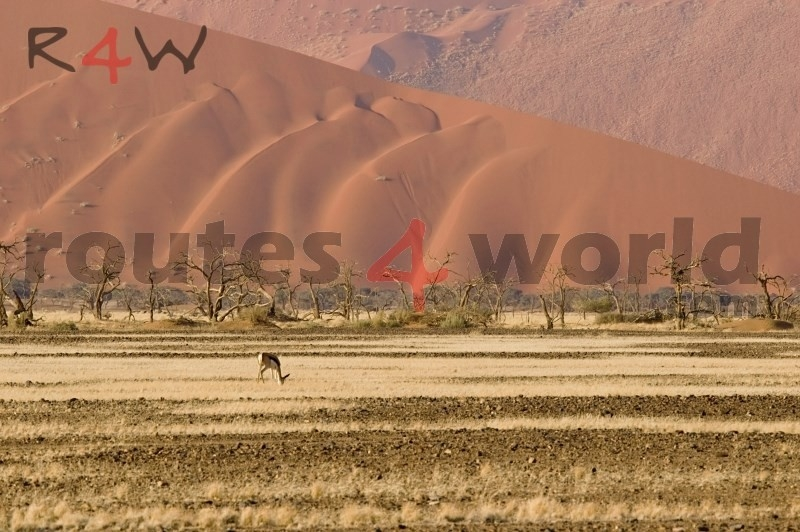 Fotos Namibia Web-R4W (45)