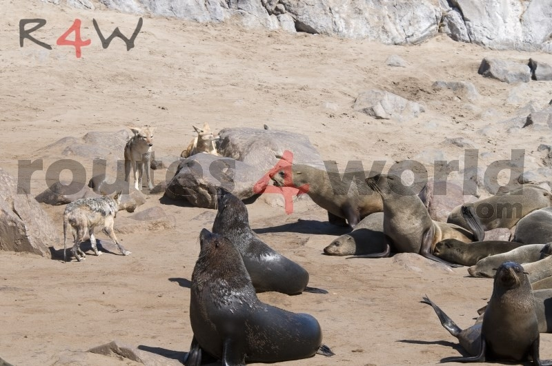 Fotos Namibia Web-R4W (51)