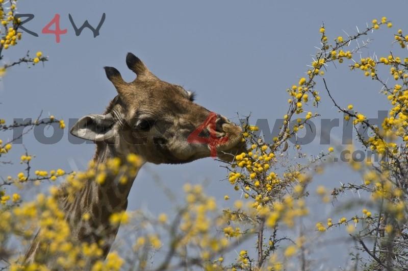 Fotos Namibia Web-R4W (58)