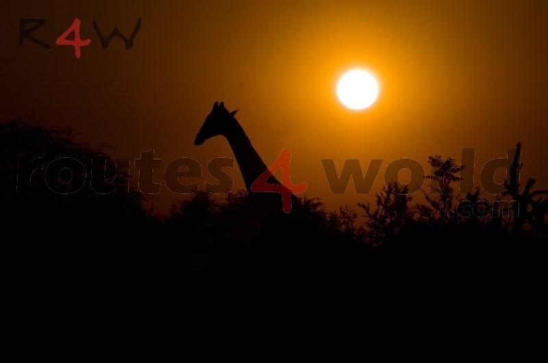 Fotos Namibia Web-R4W (60)