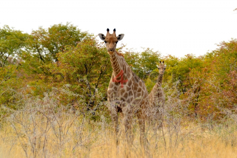 Fotos Namibia Web-R4W (7)