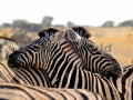 Fotos Namibia Web-R4W (12)