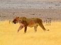Fotos Namibia Web-R4W (15)