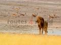 Fotos Namibia Web-R4W (36)