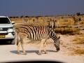 Fotos Namibia Web-R4W (5)