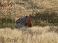 Fotos Namibia Web-R4W (52)