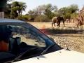 Fotos Namibia Web-R4W (58-1) (5)