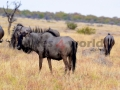 Fotos Namibia Web-R4W (6)