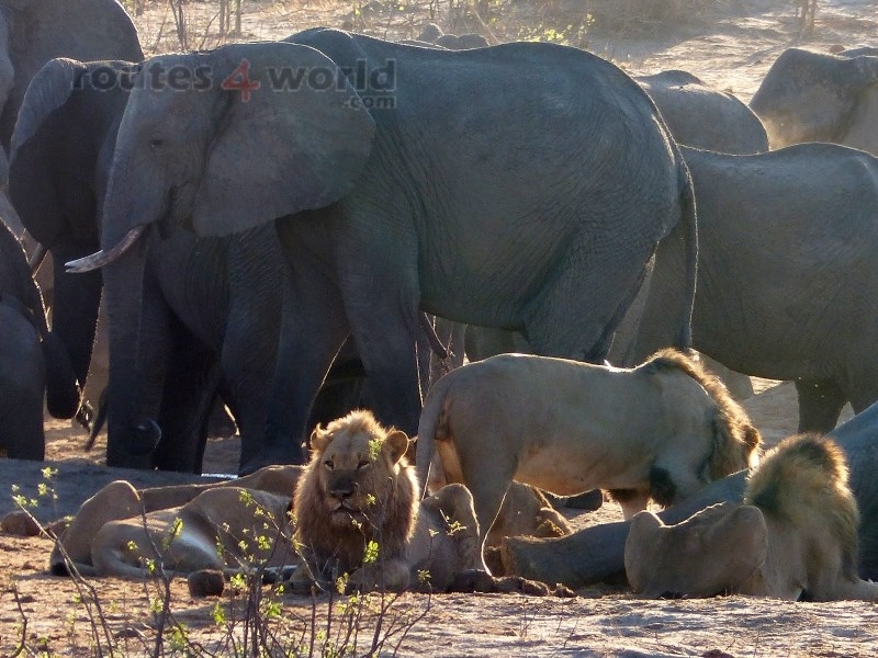 Viaje Surafrica 005