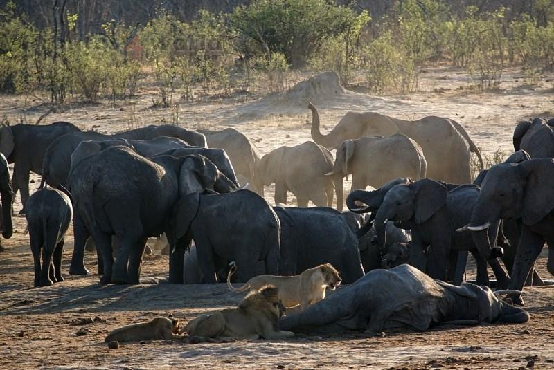 Viaje Surafrica 006