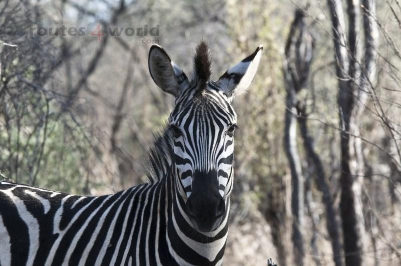Viaje Surafrica 009