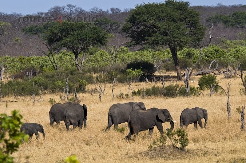 Viaje Surafrica 010