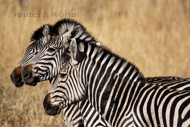 Viaje Surafrica 011