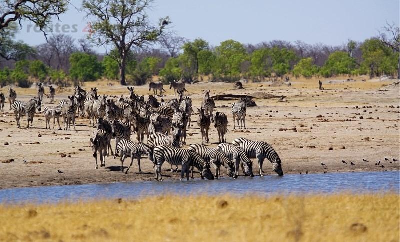 Viaje Surafrica 014
