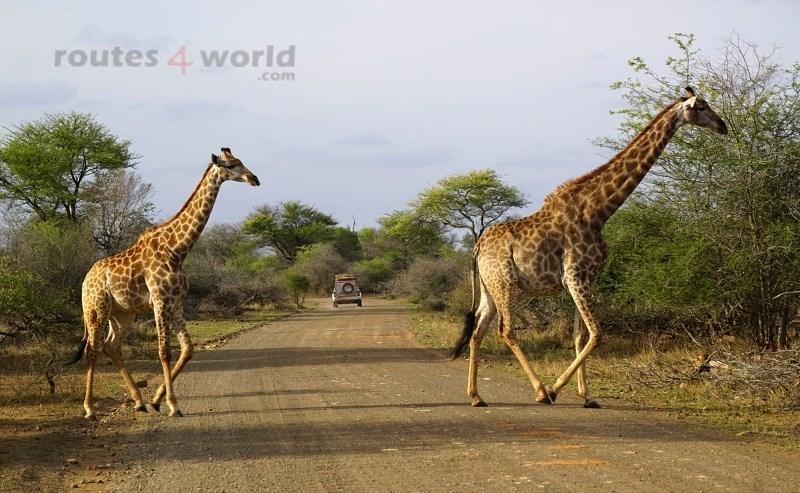 Viaje Surafrica 063