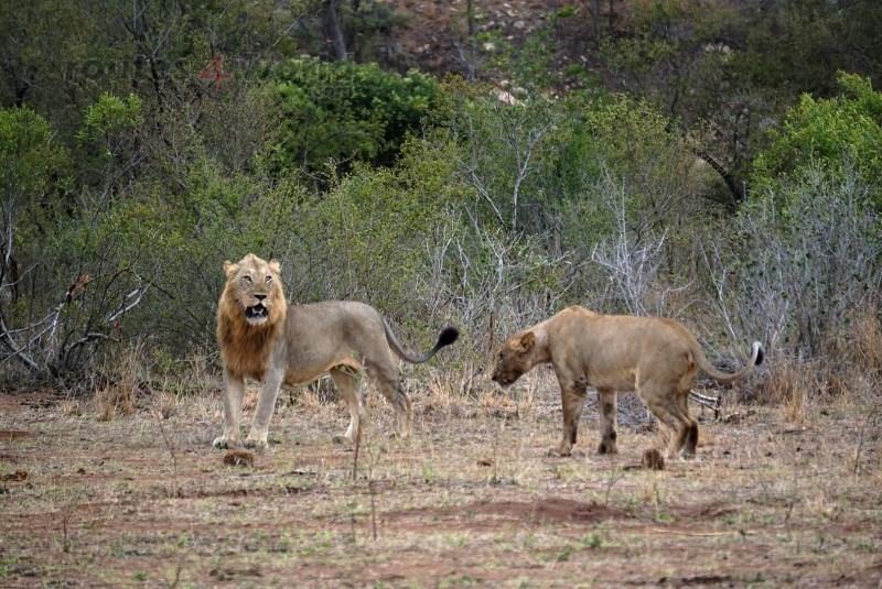 Viaje Surafrica 067