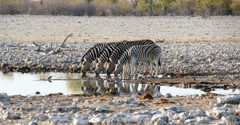 Viaje Namibia 16 181